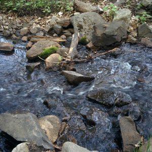 L'eau douce: Combien en consommez-vous ?