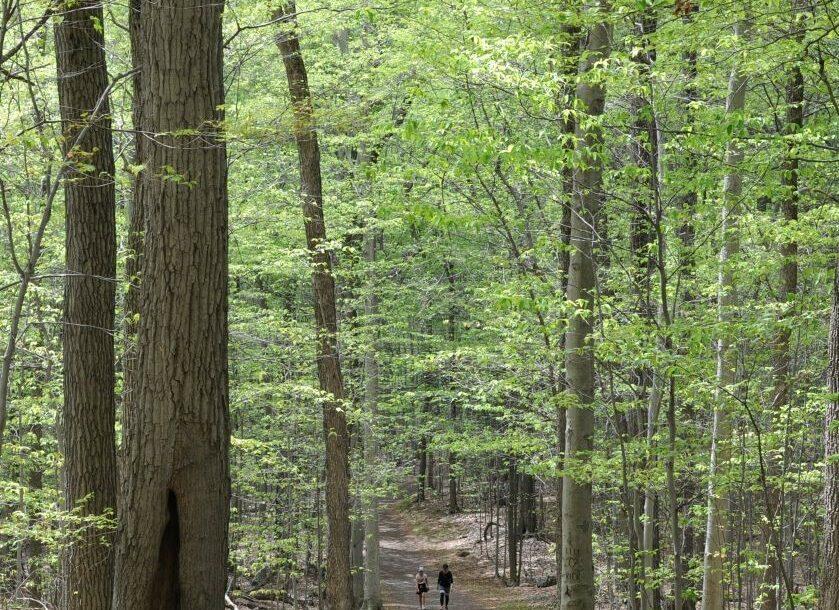 Nature résiliente : une deuxième pousse de feuilles